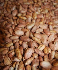 råa hela kakaobönor